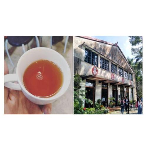 旅行找茶趣–日月潭茶區